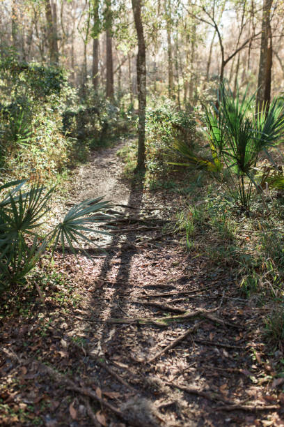 sonniger feldweg - palmwedel stock-fotos und bilder
