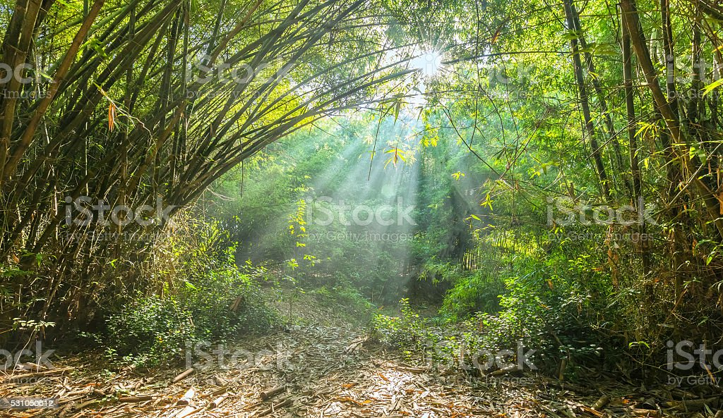 Sonnige frühen in der Bambuswald – Foto