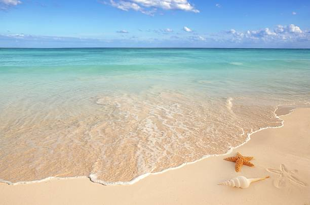 sunny empty beach with a starfish and seashell  starfish stock pictures, royalty-free photos & images