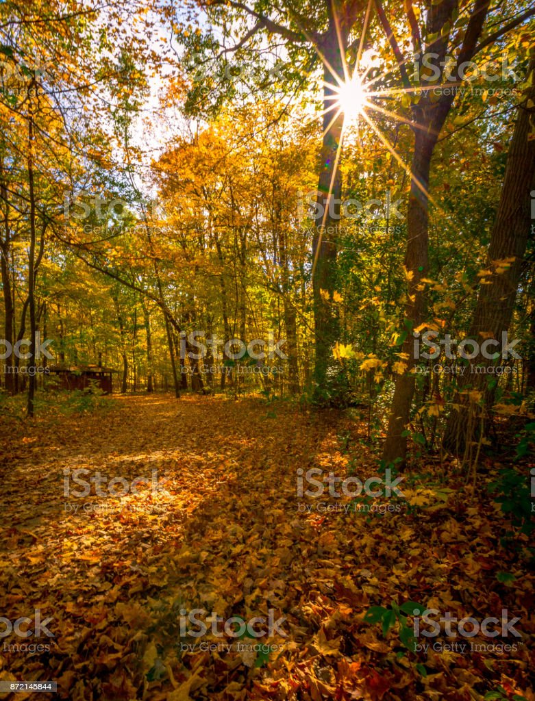 Sunny fall day in the forest preserve stock photo