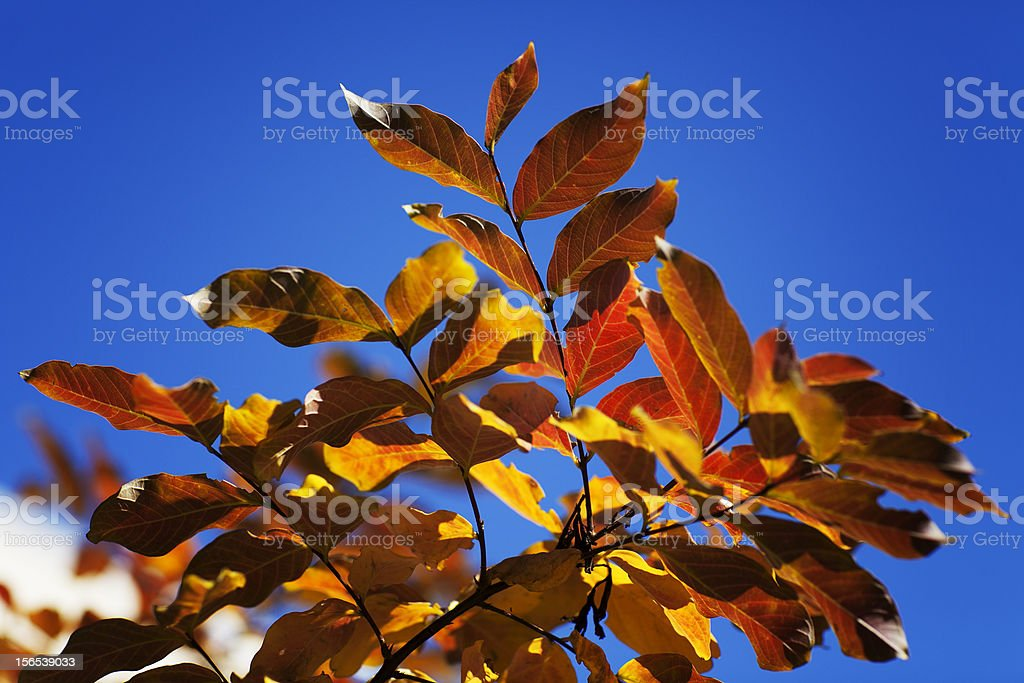 Sunny Fall Day royalty-free stock photo