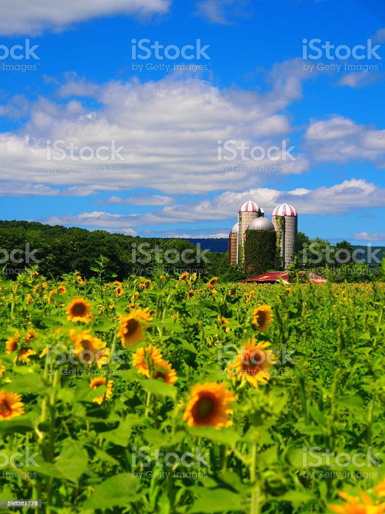 Sunny Farm royalty-free stock photo
