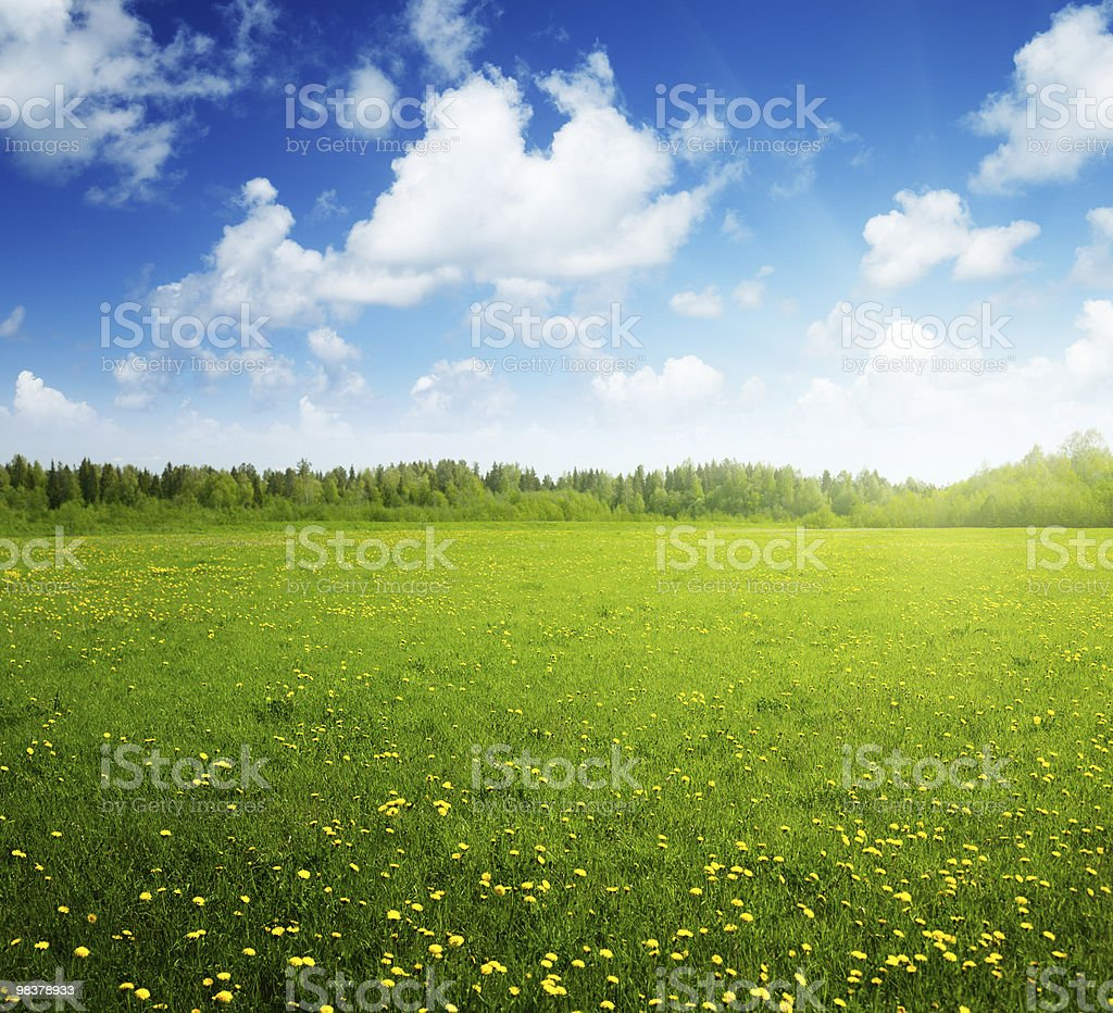 A sunny field of flowers with a blue sky royalty-free stock photo