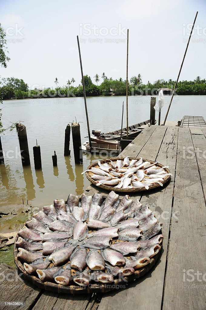 Sunny fish royalty-free stock photo