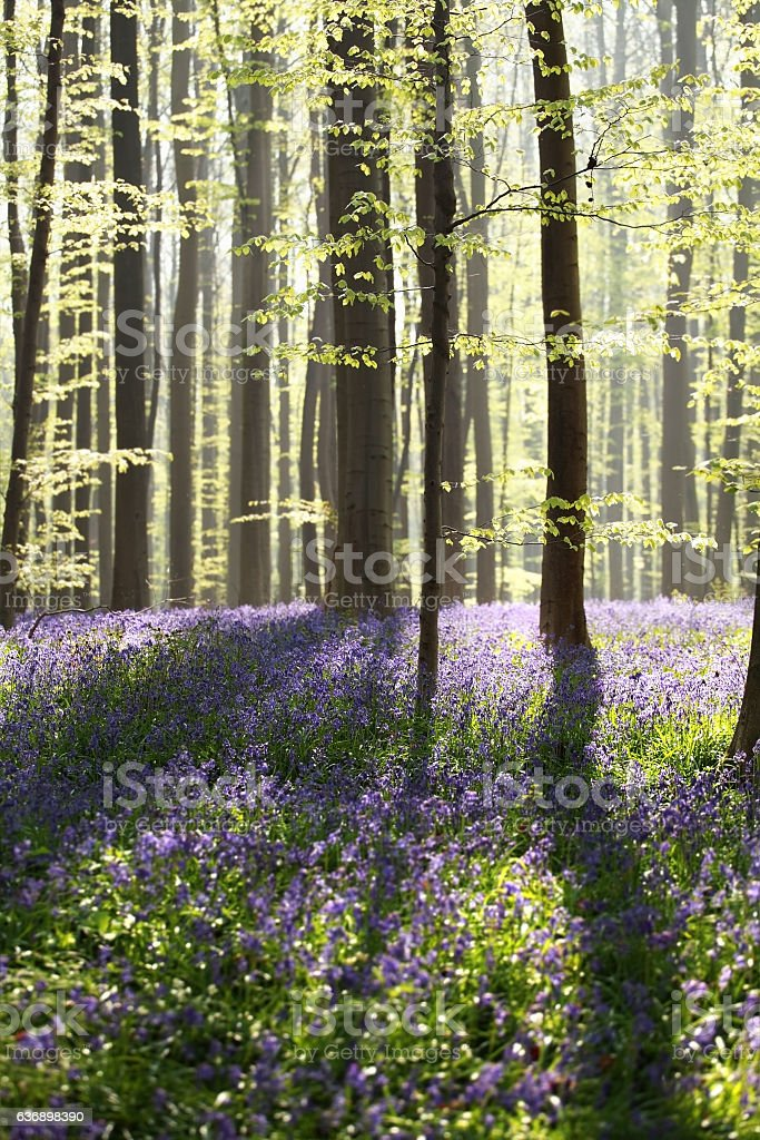 sunny flowering spring forest stock photo