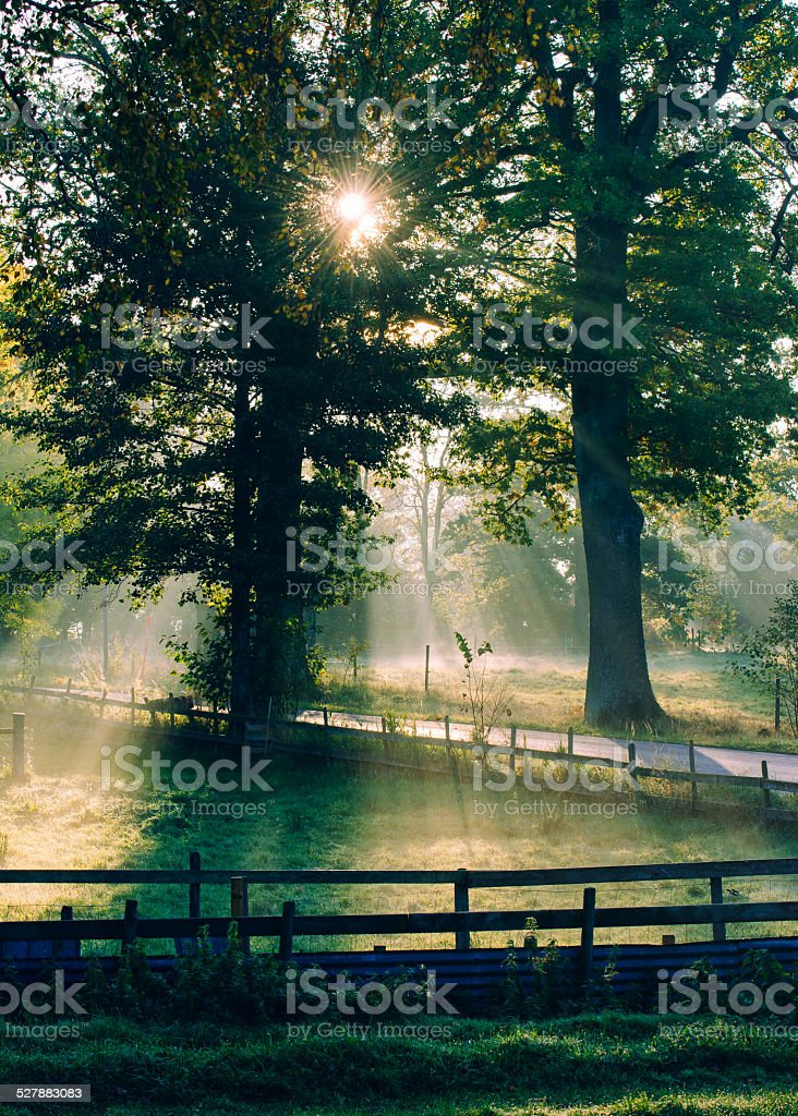 Sunny foggy autumn morning stock photo