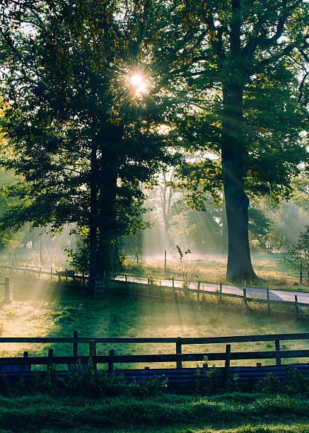 Sunny foggy autumn morning stock photo