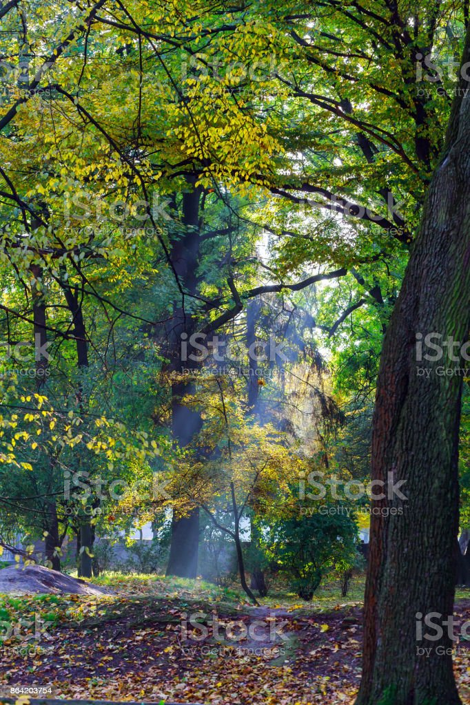 Sunny forest early in the morning royalty-free stock photo