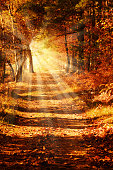 Sunny forest path in autumn