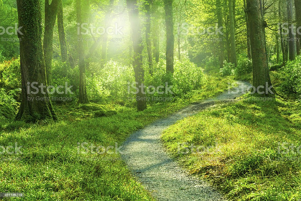Sunny Forest Path stock photo