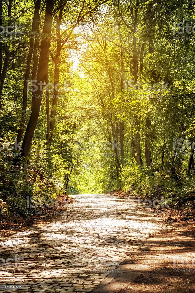 Sonnigen Wald road – Foto
