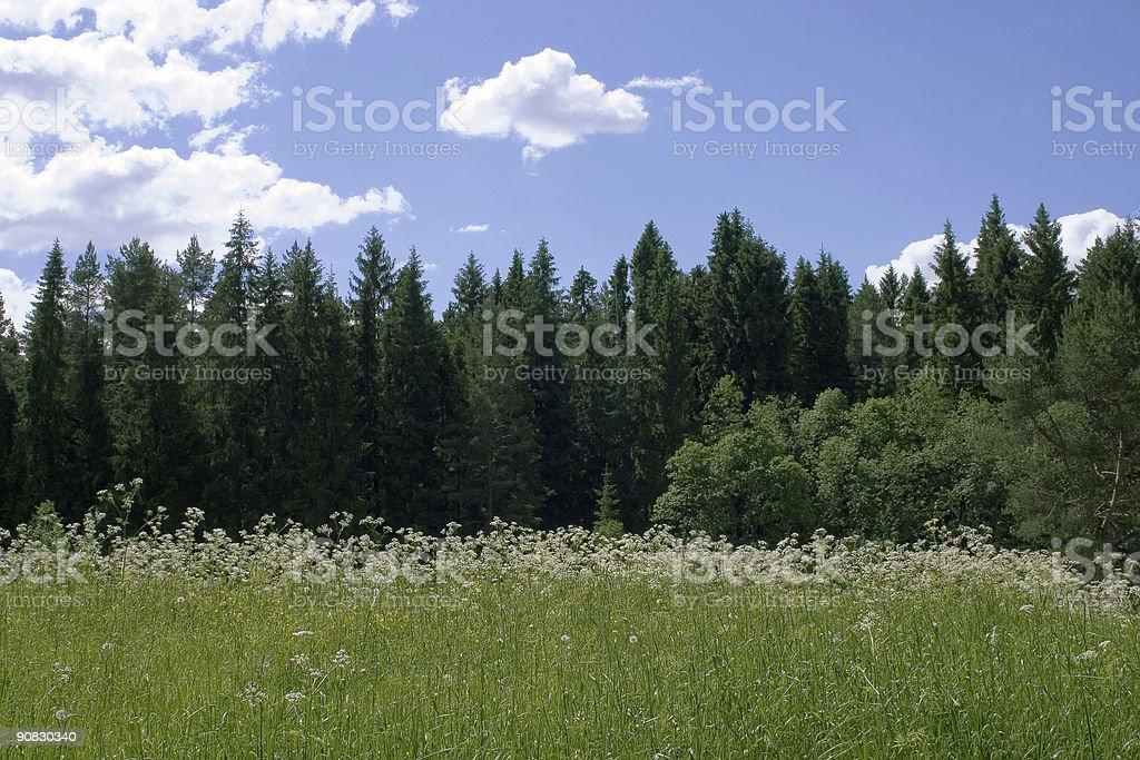 Sunny glade stock photo