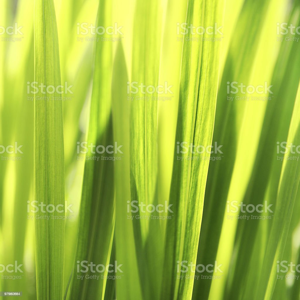 Sunny grass background. Soft, selective focus. royalty-free stock photo