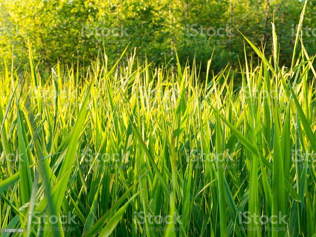 Sunny green grass stock photo