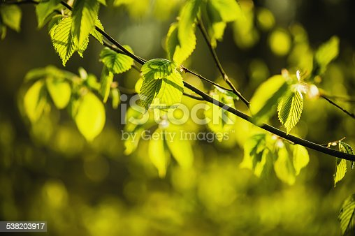 639809128istockphoto Sunny green leaves 538203917