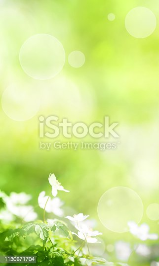 Sunny green spring background with small white flowers and bright bokeh