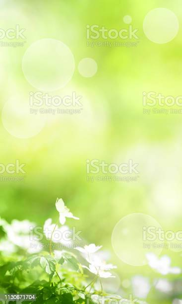 Sunny green spring background picture id1130671704?b=1&k=6&m=1130671704&s=612x612&h=2oe0s2seltqoi331epoktzgotjw3jwmcruiqv3jid7m=