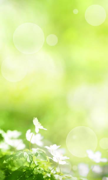 Sunny green spring background picture id1130671704?b=1&k=6&m=1130671704&s=612x612&w=0&h=rzgysc5wtnhcsayv1g jvpnwwfsrradq0r0vyl8lmvk=