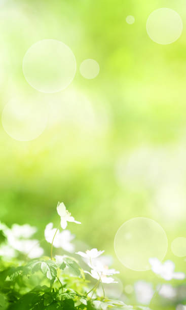 Sunny green spring background Sunny green spring background with small white flowers and bright bokeh springtime stock pictures, royalty-free photos & images