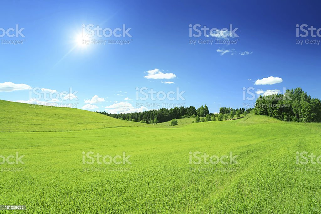 Sunny Landscape - Blue Sky and Field XXXL image - Royalty-free Agricultural Field Stock Photo