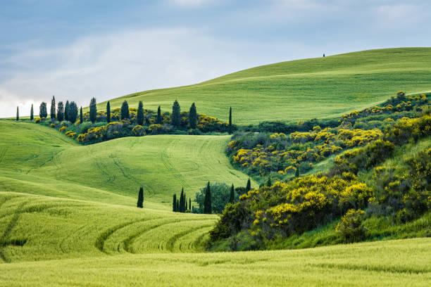 Sunny landscape from Val d'Orcia, Tuscany, Italy stock photo