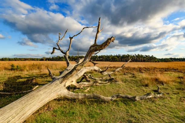 Zonnig landschap in het natuurreservaat Deelerwoud tijdens een mooie valdag foto