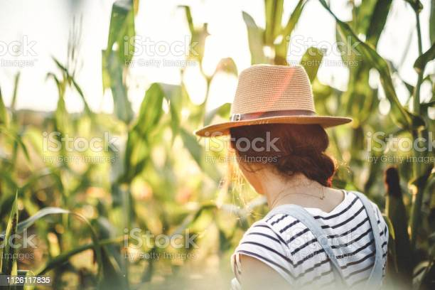 Photo of Sunny landscape in the field of corn