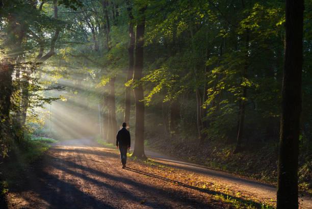 Sunny lane walk stock photo