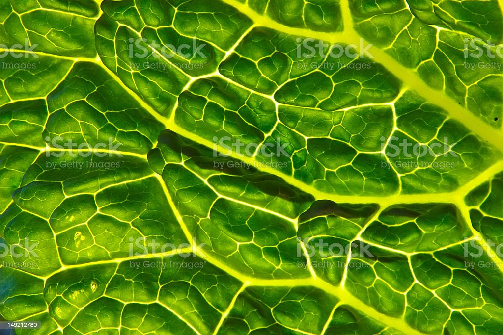 Sunny leaf stock photo