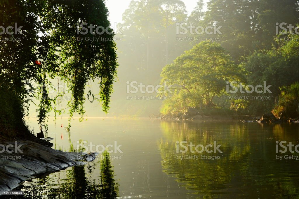 Sunny light glowing tree along river stock photo