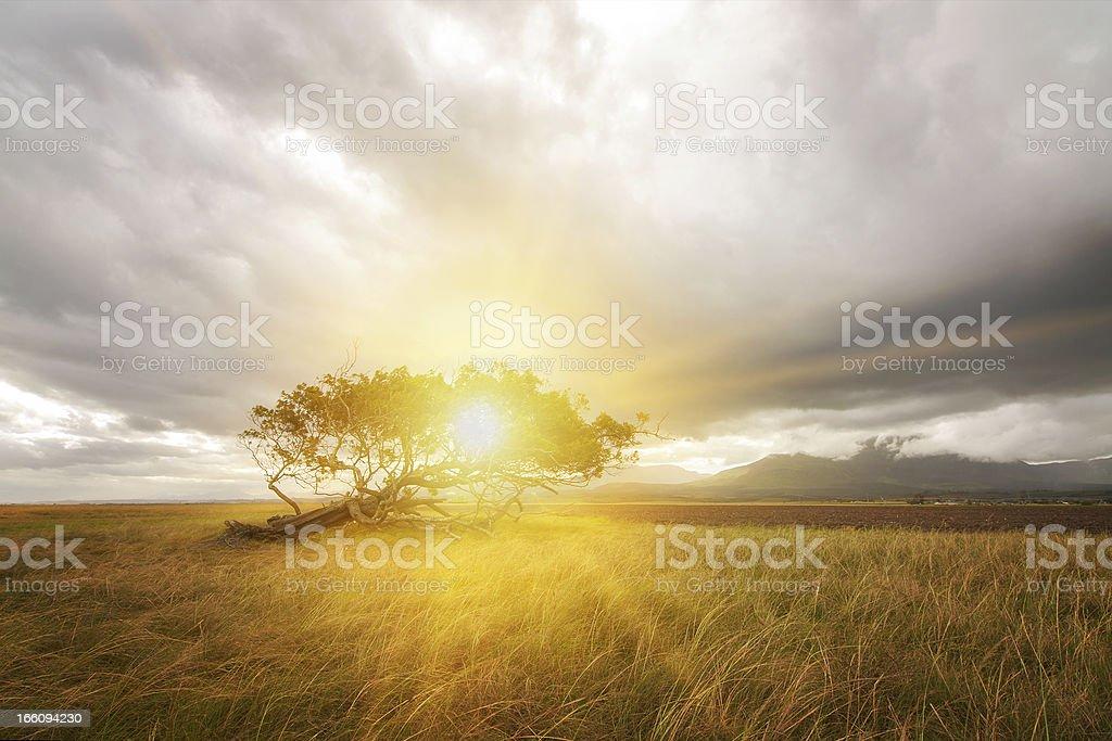 sunny lone tree royalty-free stock photo