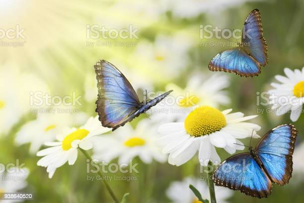 Photo of sunny meadow with blue butterflies