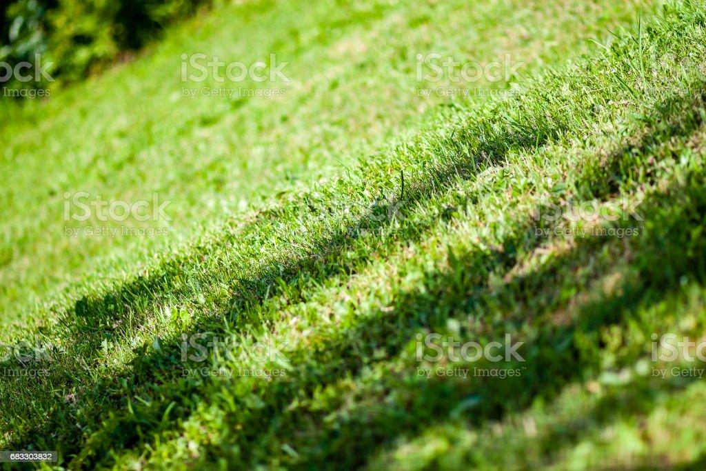 sunny meadow with flowers and green grass zbiór zdjęć royalty-free
