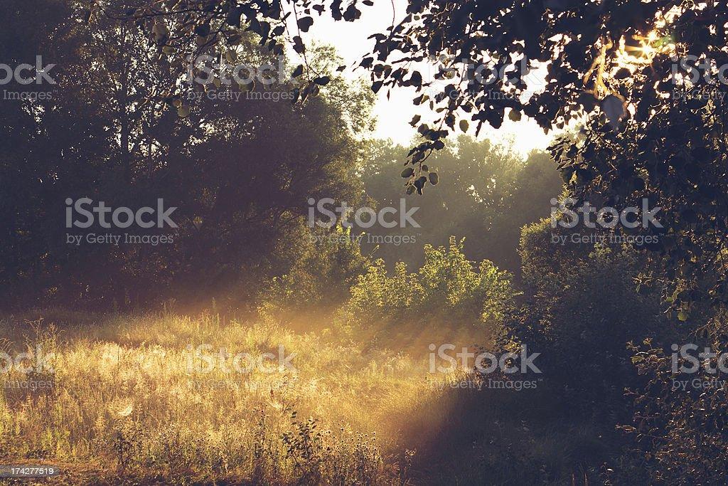 Sunny morning at lawn royalty-free stock photo