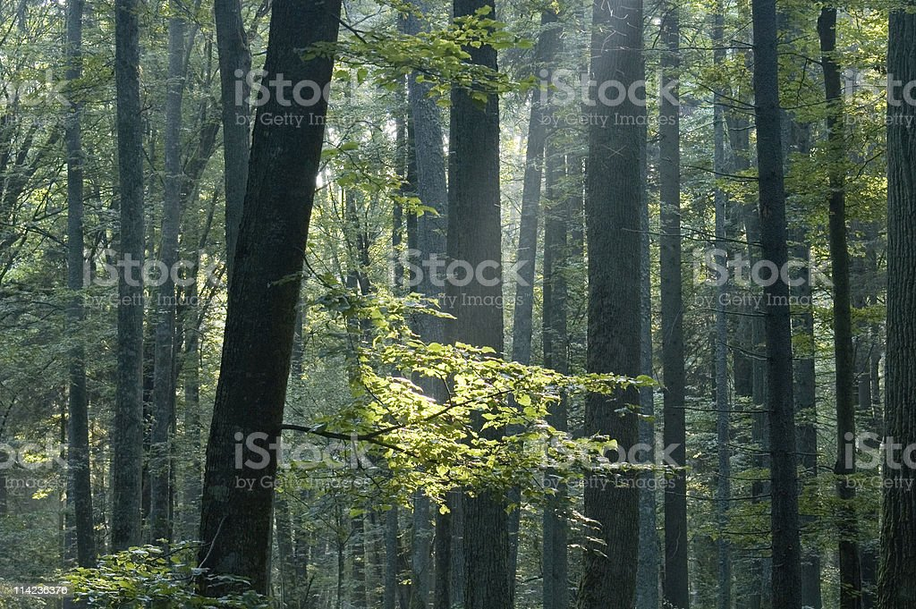 Sunny morning in the forest royalty-free stock photo