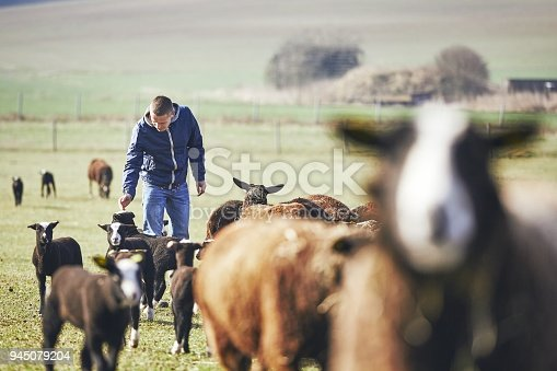 istock Sunny morning on the rural farm 945079204