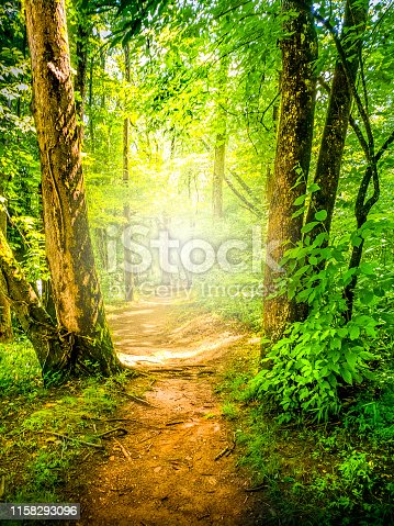 Mountain Hiking Trail in a Sunny Forest. The American South.