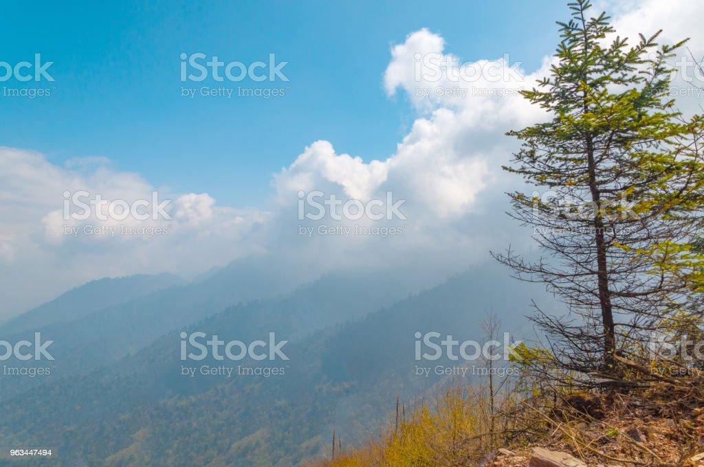 Güneşli açık fotoğraf - Royalty-free Akasya Ağacı Stok görsel