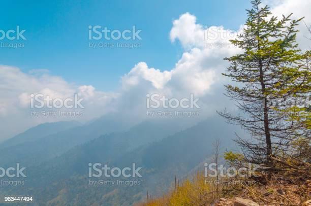 Güneşli Açık Fotoğraf Stok Fotoğraflar & Akasya Ağacı'nin Daha Fazla Resimleri
