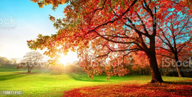 Photo of Sunny park in glorious autumn colors
