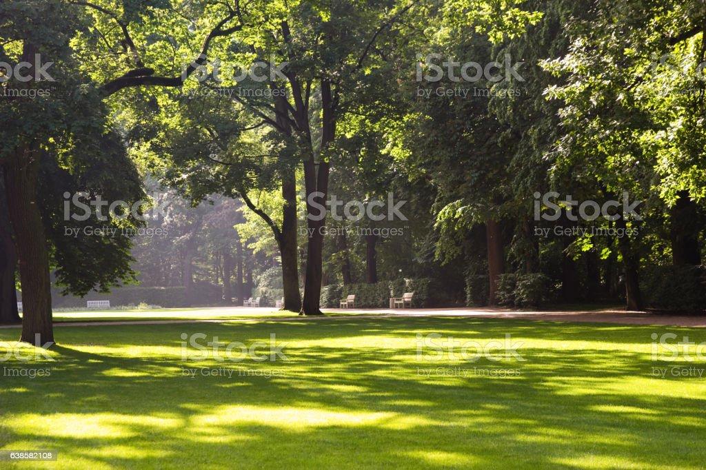 sunny park landscape stock photo