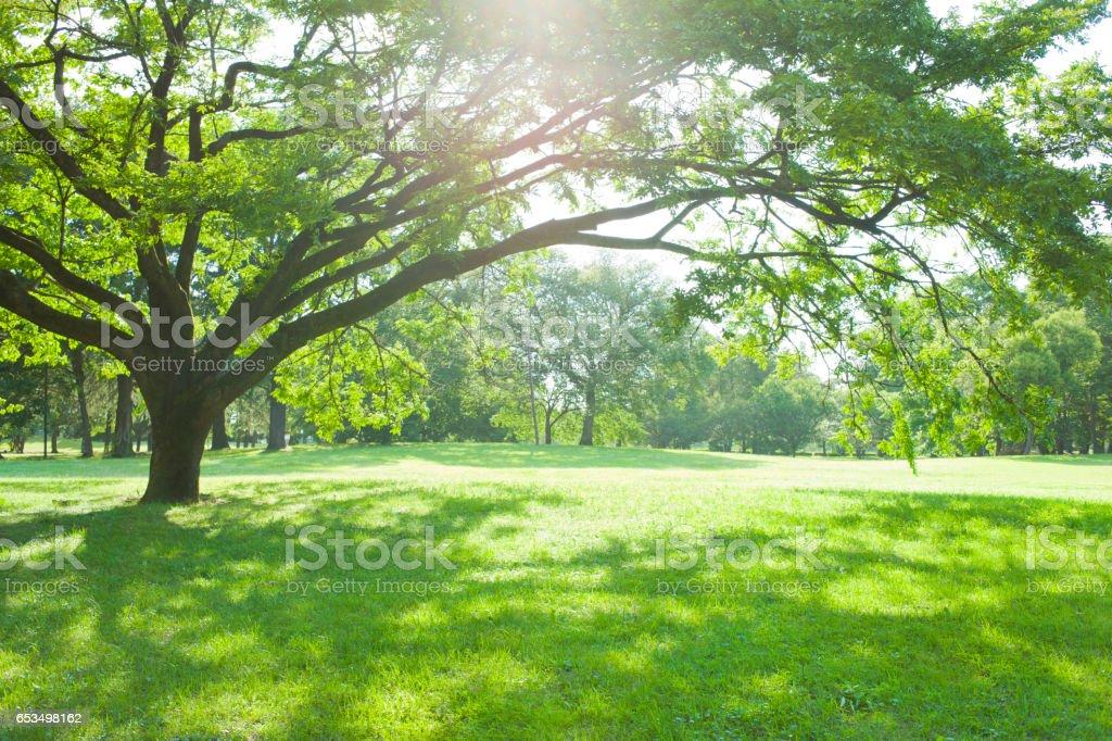 Sunny park stock photo