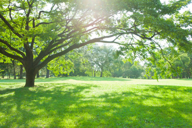 sunny park - lush foliage stock pictures, royalty-free photos & images
