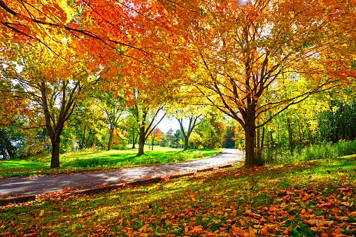 istock Sunny Path Through Sugar Maple Trees in Autumn 1054032452