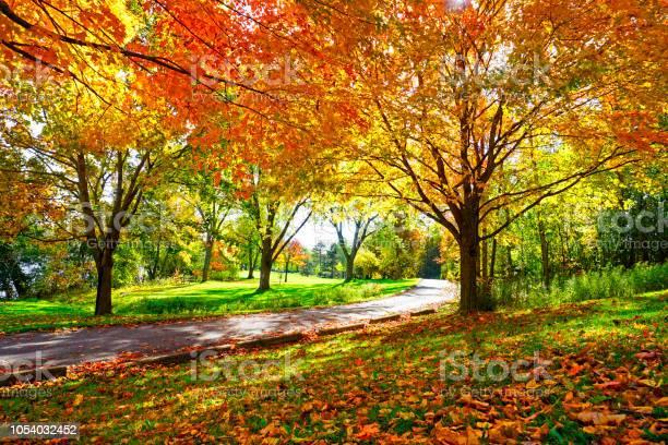 Photo of Sunny Path Through Sugar Maple Trees in Autumn