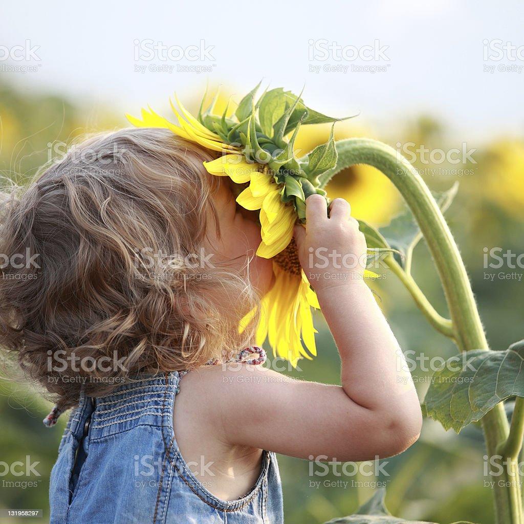 Sunny stock photo