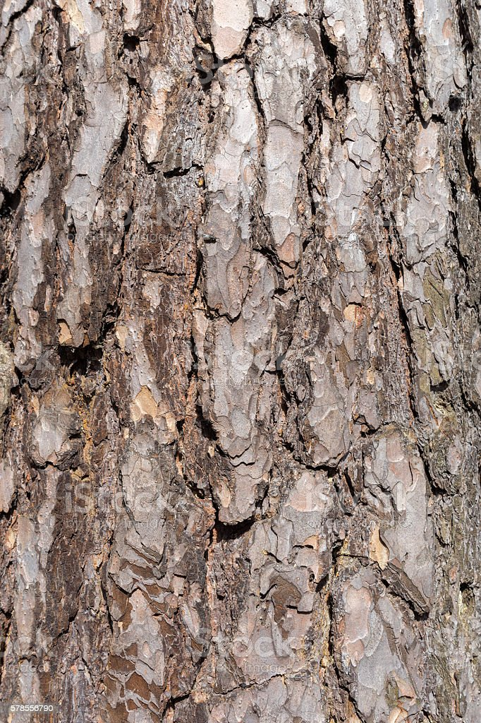 Sunny pine bark background macro view stock photo