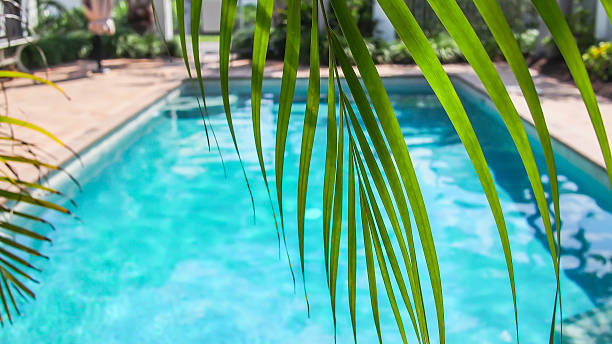 Sunny pool with palm stock photo