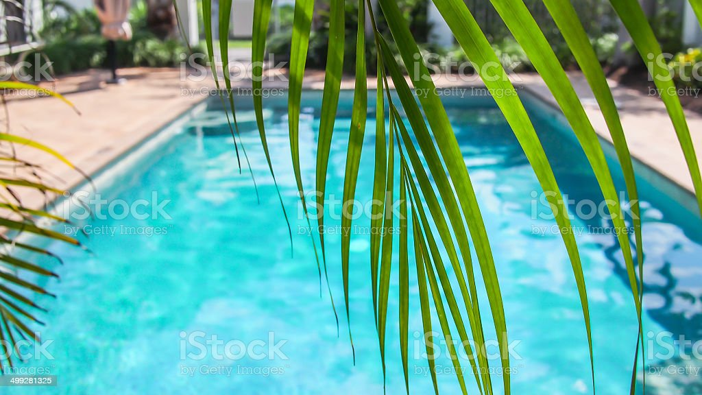 Sonnigen pool mit Palmen – Foto