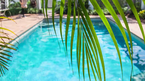 sonnigen pool mit palmen - palmengarten stock-fotos und bilder